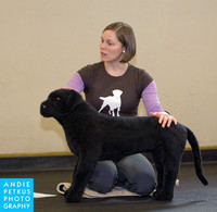 Heal dog massage class at Doggie Business